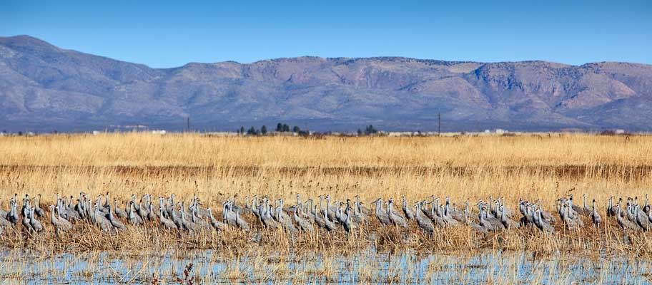 Birding at Arizona Guest Ranch Resort